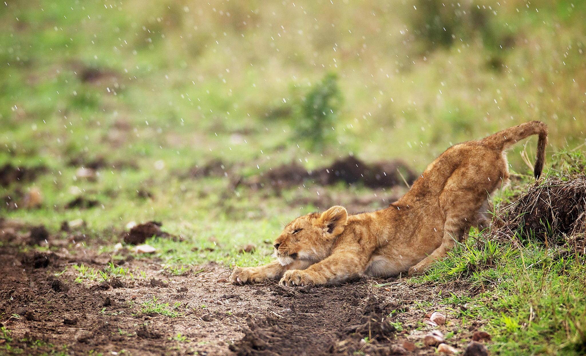 A little stretch © Mark Bridger