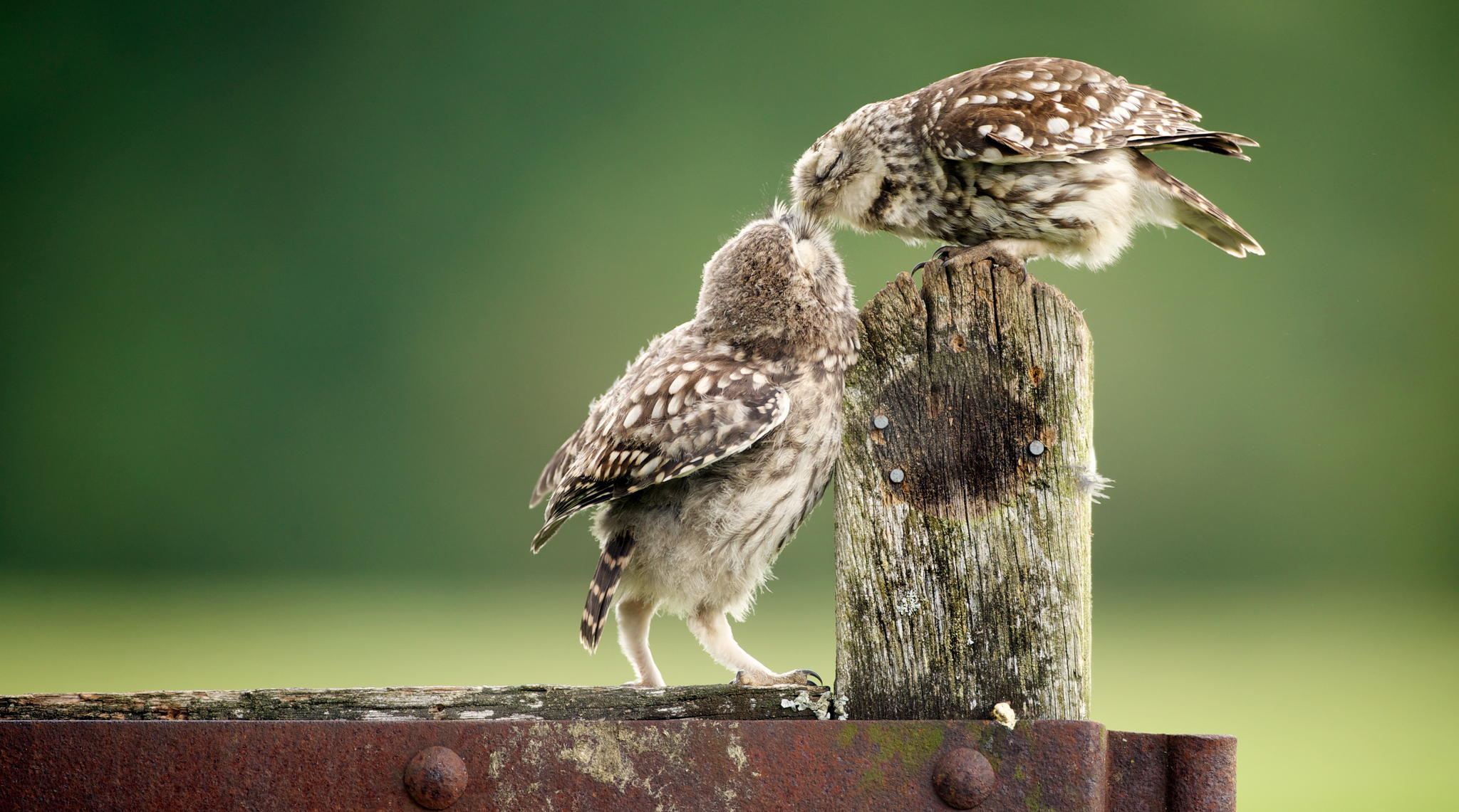 Another Little Peck © Mark Bridger
