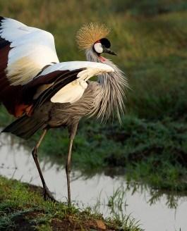 For More Wonder, Rewild the World