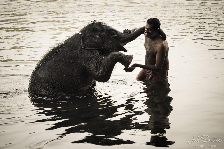 Orphan Elephant, Kerala, India