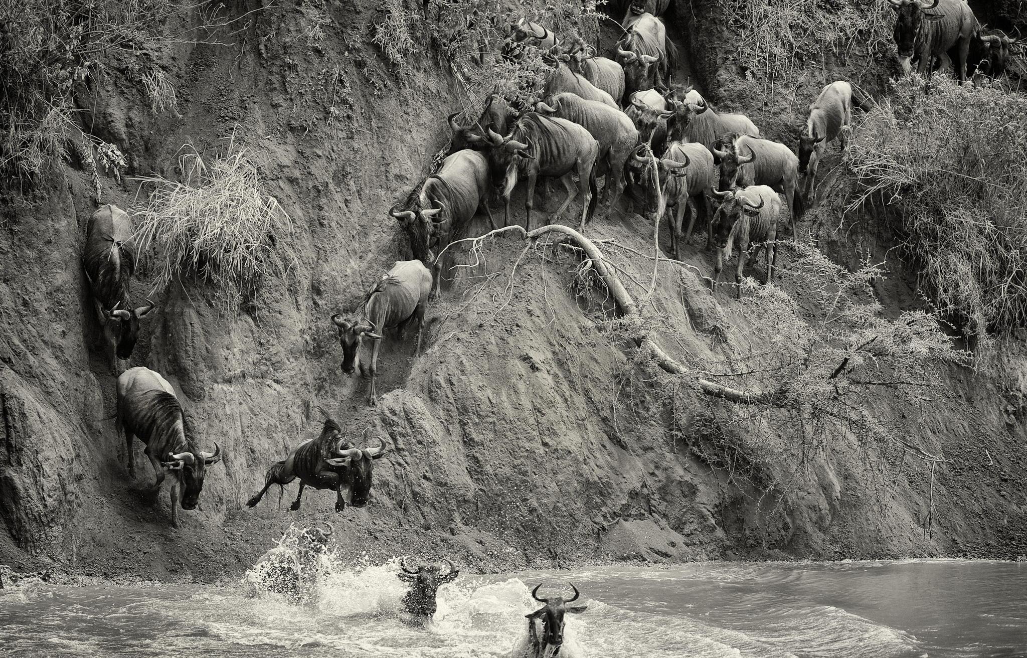 Jump! © Mark Bridger