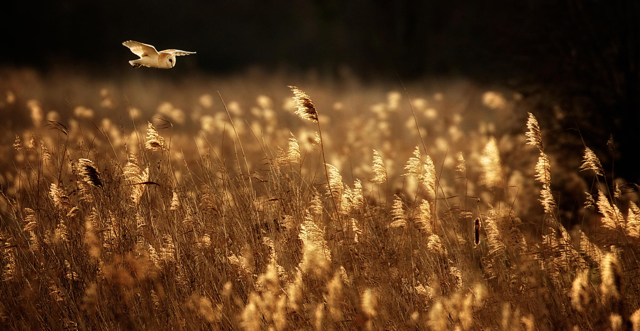 Last Glide © Mark Bridger