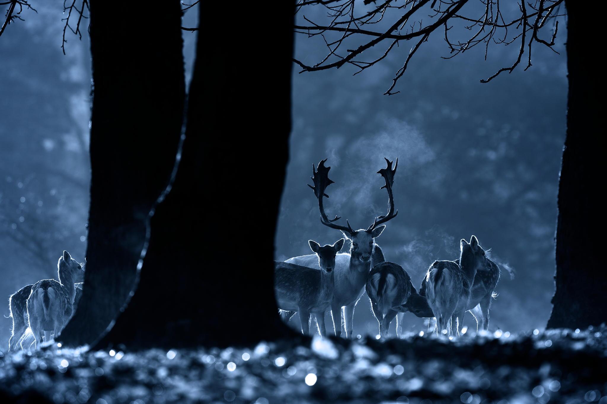 Night Life © Mark Bridger