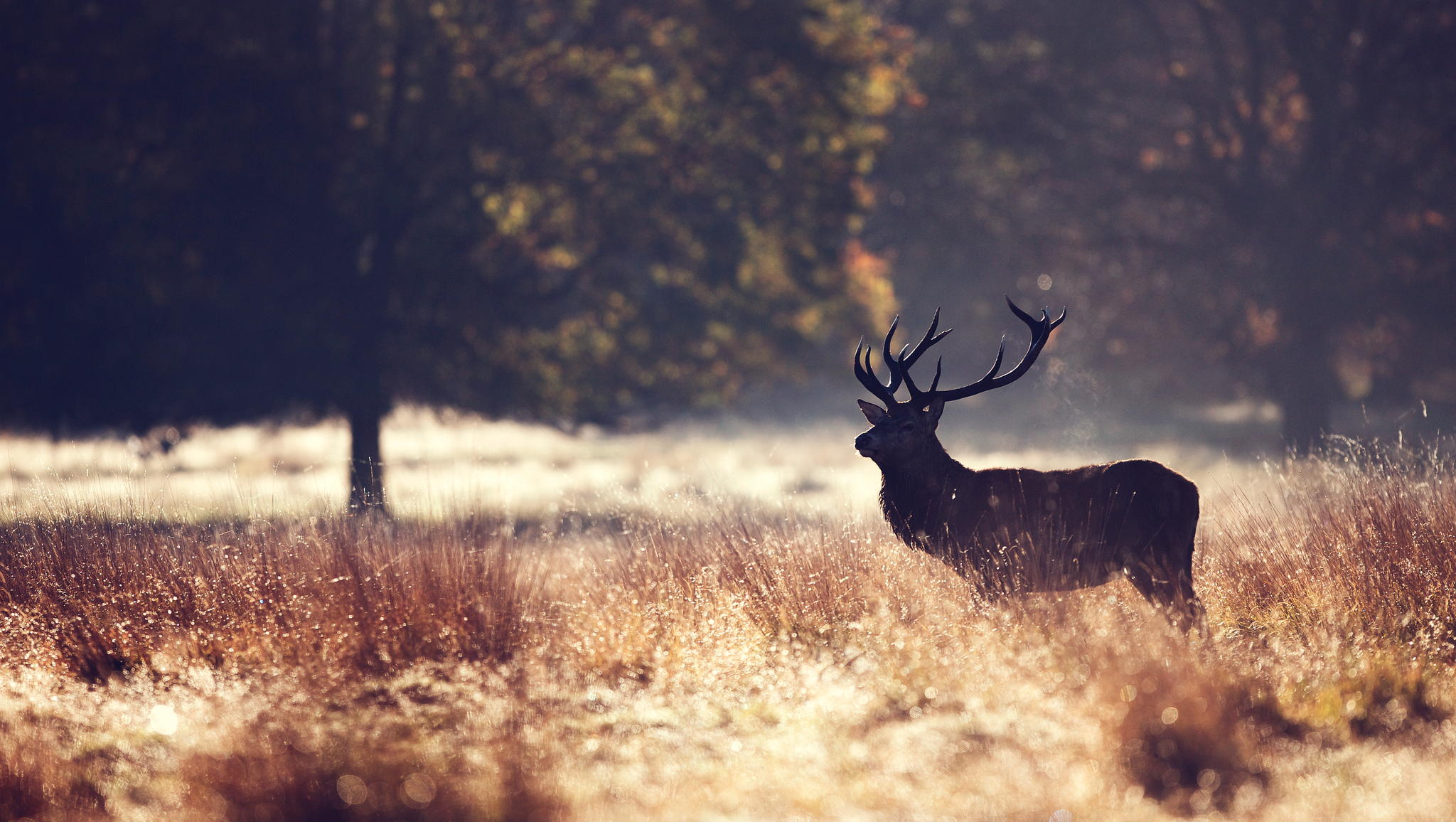One of the lads © Mark Bridger