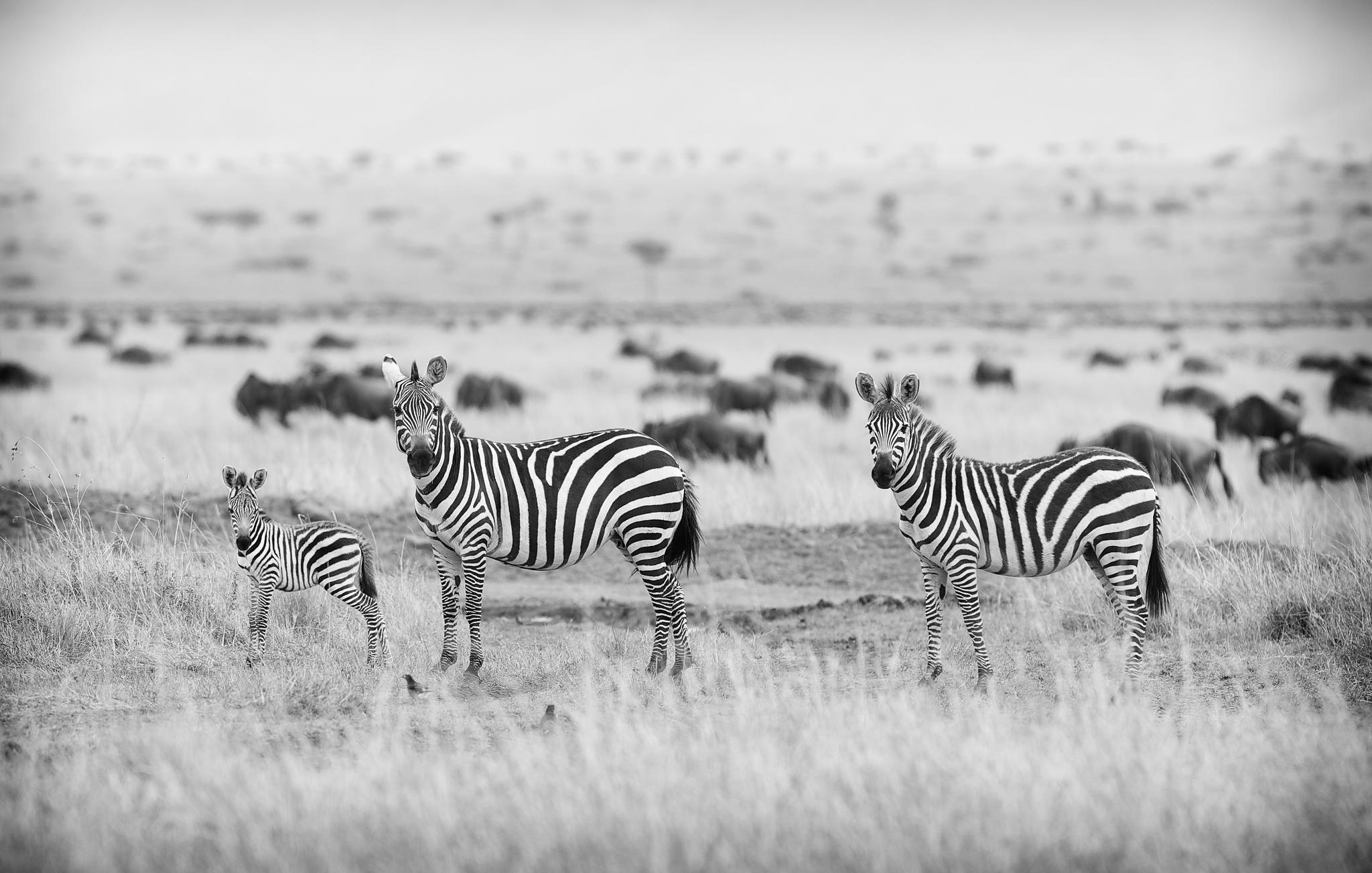 Stripes © Mark Bridger