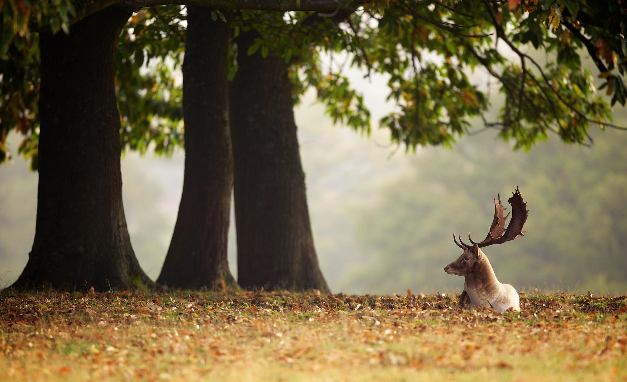 © Mark Bridger