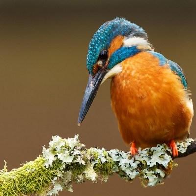 Video Birds